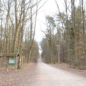bruderwald bamberg 1 280x280 - Bruderwald