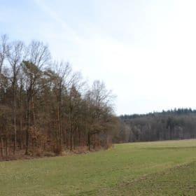 bruderwald bamberg 7 280x280 - Bruderwald