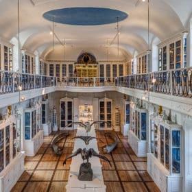 naturkundemuseum bamberg 280x280 - Sehenswürdigkeiten Bamberg