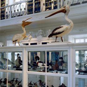naturkundemuseum bamberg 3 280x280 - Naturkundemuseum Bamberg